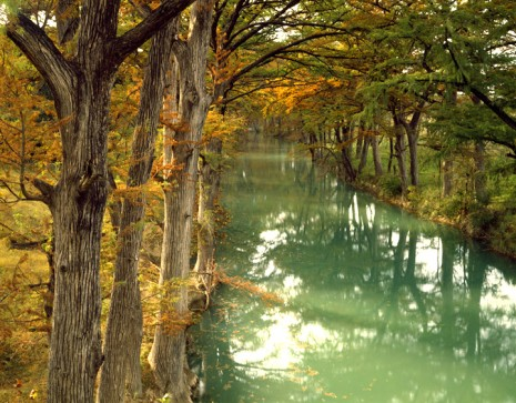 Bald Cypress Trees along Lower Sabinal River, Near Utopia Photo courtesy of Charles Kruvand