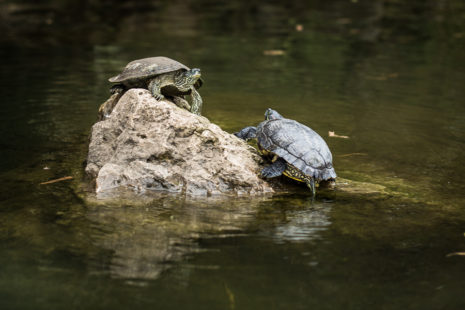 Turtles and other water-loving wildlife need us to conserve water year round.