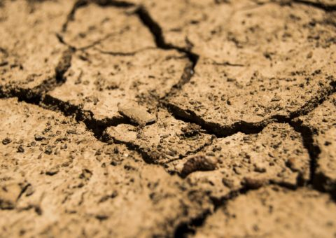 Drought conditions need to be taken into account for drought response plans