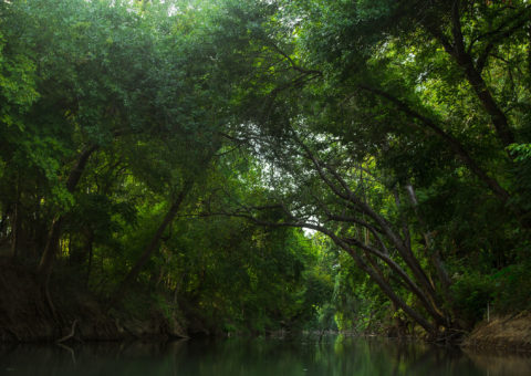 Luling-Zedler paddling trail is one of the Texas Paddling Trails