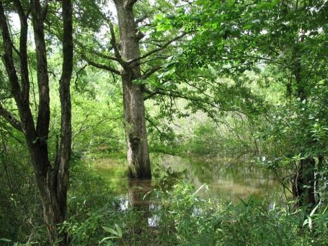 Flooded bottomland hardwood forest Photo courtesy of Norman Johns, NWF