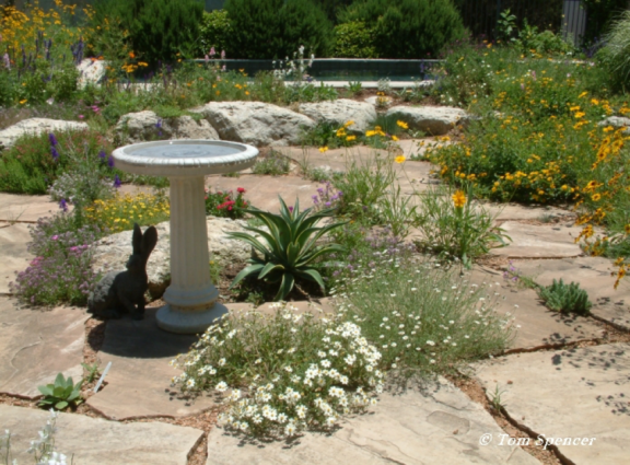 Use native plants to create gardens resilient against climate change.
