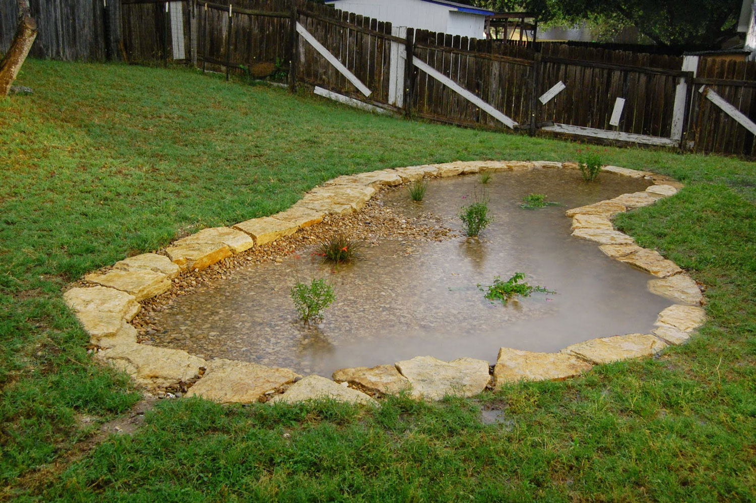 Why and how you can create a rain garden, or DIY backyard ...