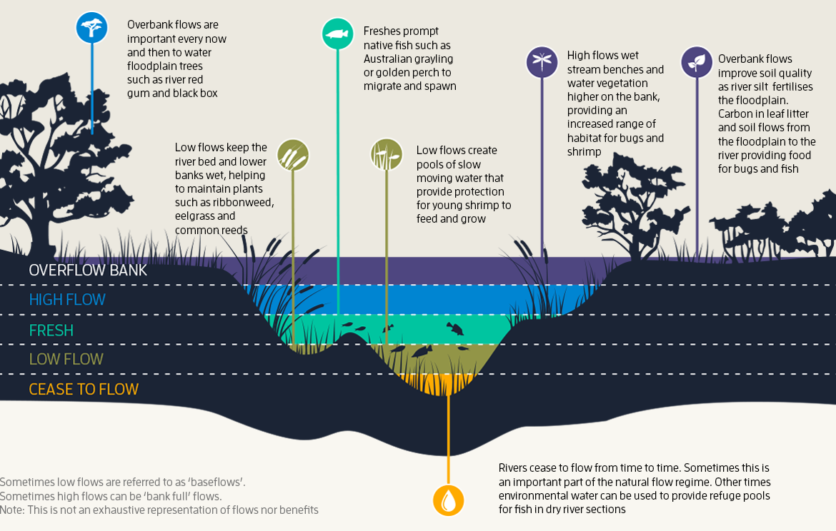 This infographic describes the importance of different natural water flow levels, including the overbank flows that allow alligator gar to venture into floodplains and lay eggs.