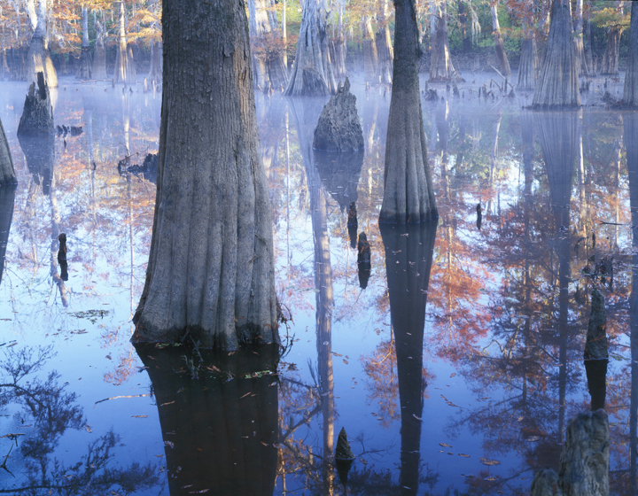 Big Thicket_Photo by Charles Kruvand